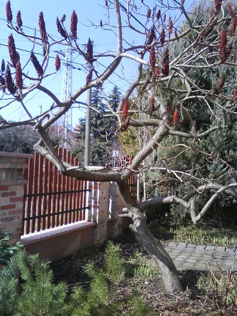 Ecetfa márciusban