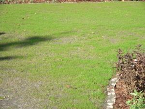 vetett fű csrázása