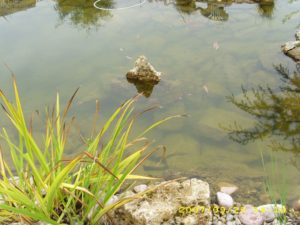 Kerti tó részlet, kiálló sziklával