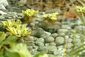 Teliház kft kert tó